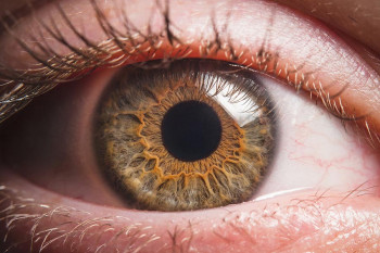 The cornea can potentially be harmed by shingles.