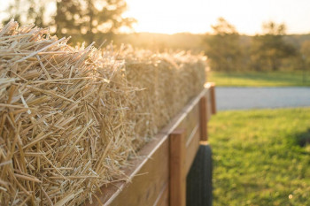A hayride where someone might get allergens