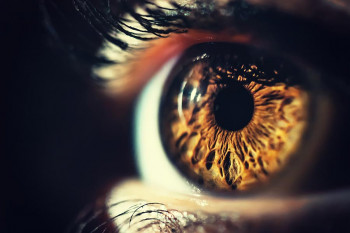 The iris and the eye's pigment